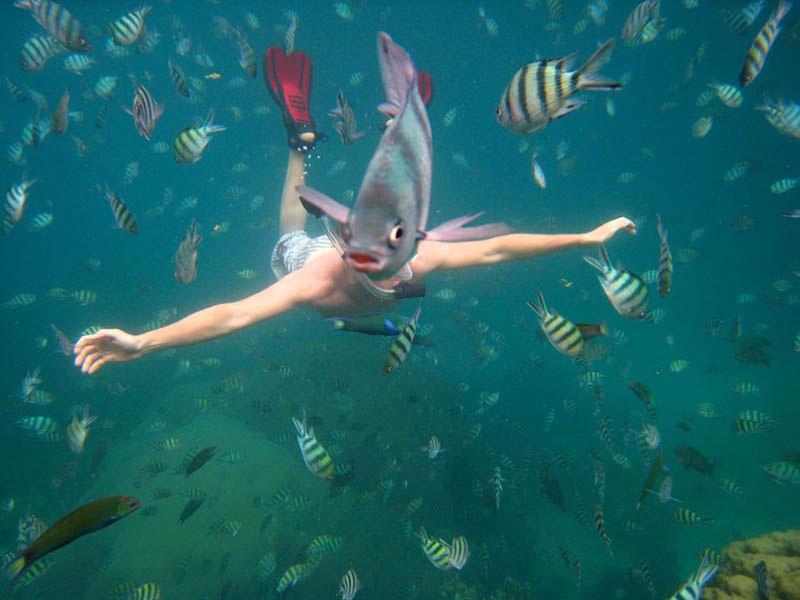 foto scattate al momento giusto - pesce