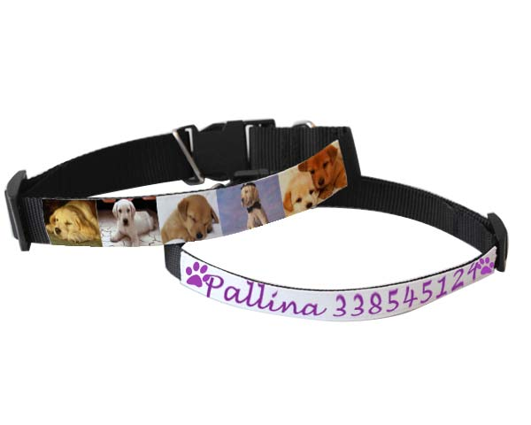 collare per cani personalizzato con foto, immagini e testi