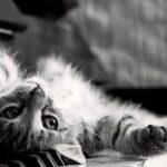 scattare foto in bianco e nero