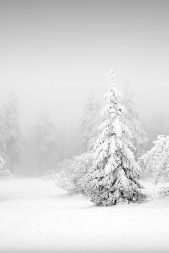fare foto sulla neve