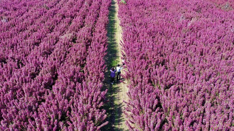 Laoting County, Cina